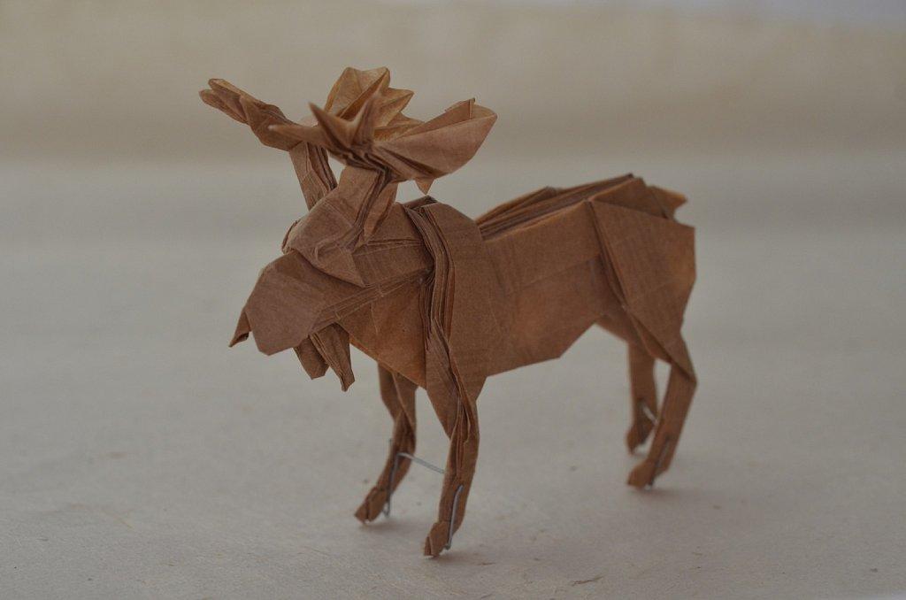 Bull Moose 3
