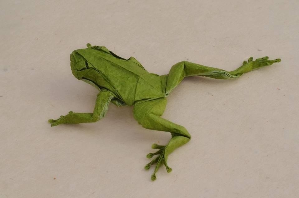 Origami Reptiles & Amphibians | 636x960